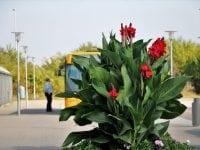 Bedre trafikinfo i Slagelse Kommune gør busserne mere attraktive
