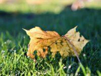 Efterårets fine farver
